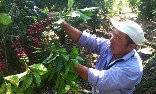 Family Coffee Farm